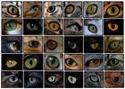 Augen Rätsel