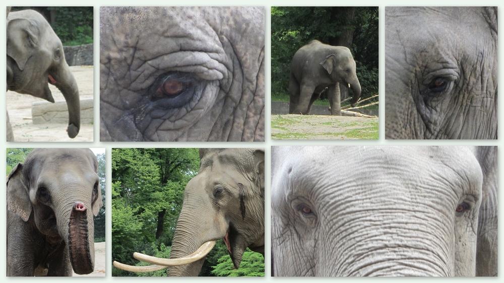 Augen vom Tierpark 01