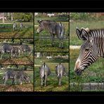 Augsburger Zoo (2)