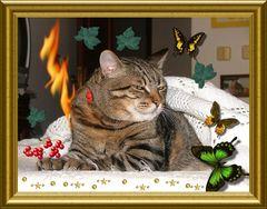 Auguri...gatto modello  soffre!!!!!