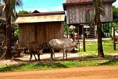 aus dem auto heraus VII, cambodia 2010