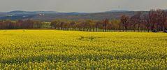 Aus dem Elbtal von Pirna kommt die Straße hoch ins Osterzgebirge...