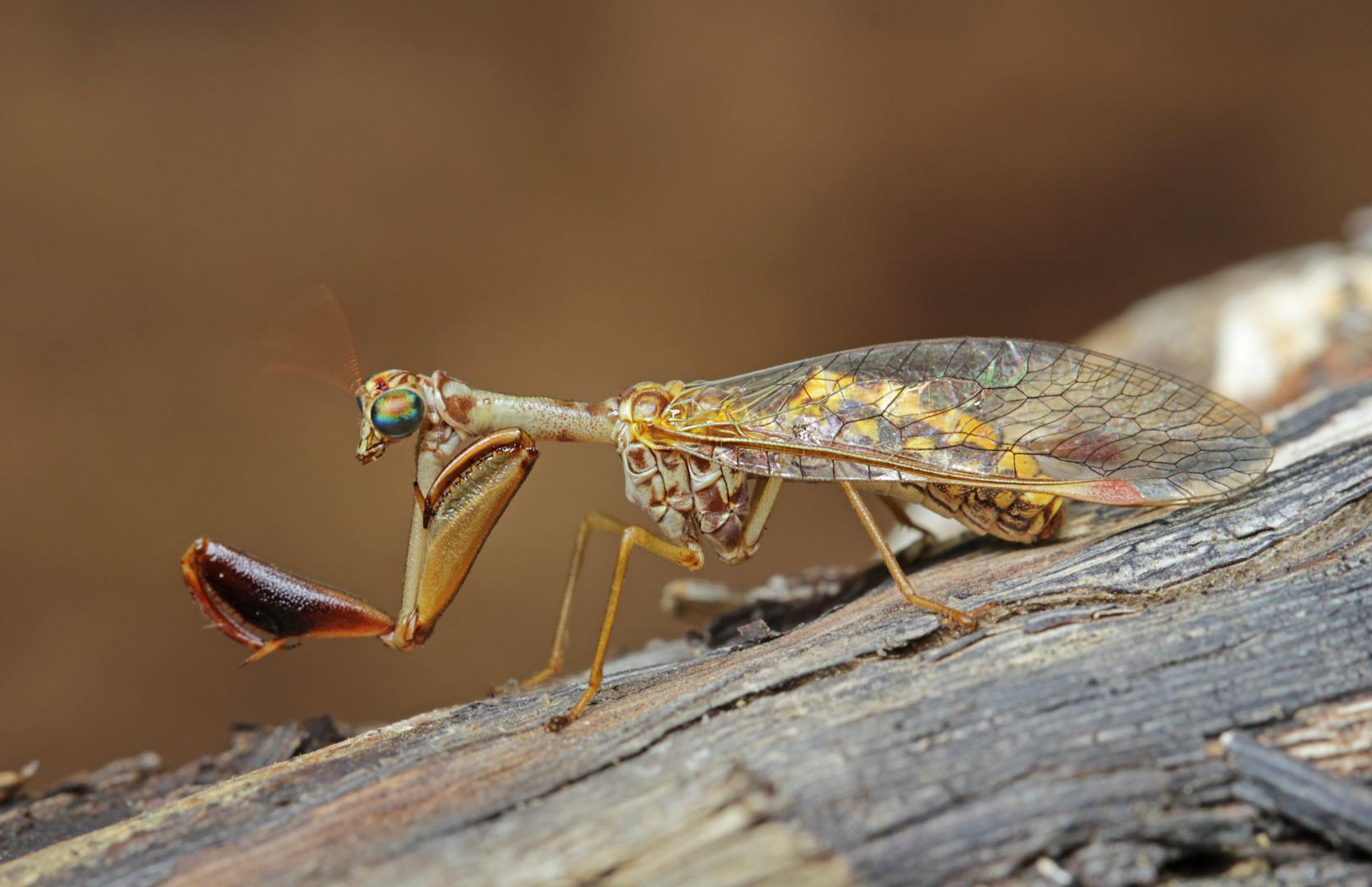 ... aus dem Insektenbaukasten