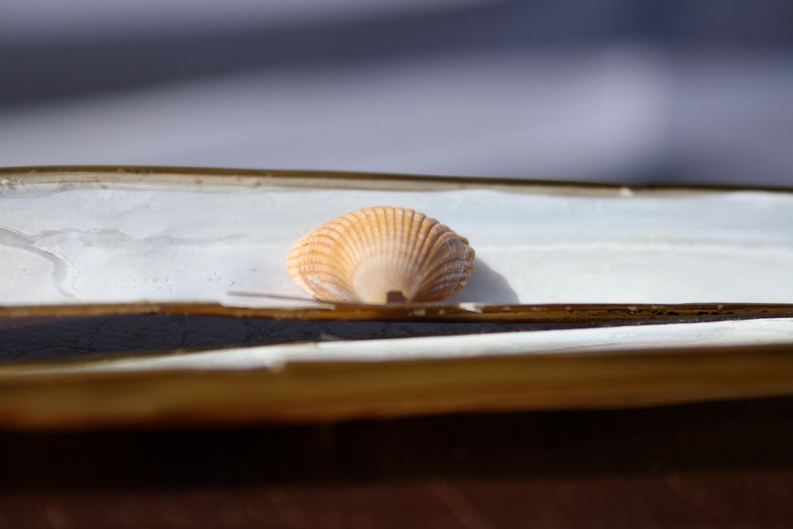 aus dem Meer