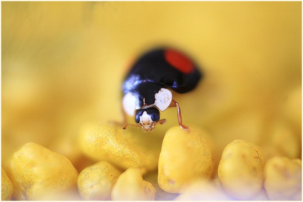 ...aus dem nebel des gr.......nur ein käfer...