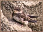 Aus dem Nest gerutscht