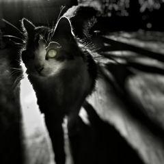 Aus den Schatten komme ich und zu Schatten werde ich
