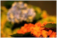 ... aus der Blüte...