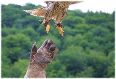 Aus der Hand des Jägers