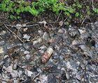 Aus der Serie: Seltene Pflanzenarten - Die gemeine Sumpfbüchse