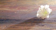 Aus der Serie weiße Blumen