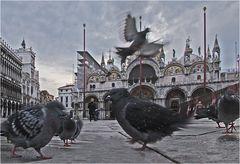 Aus der Taubenperspektive