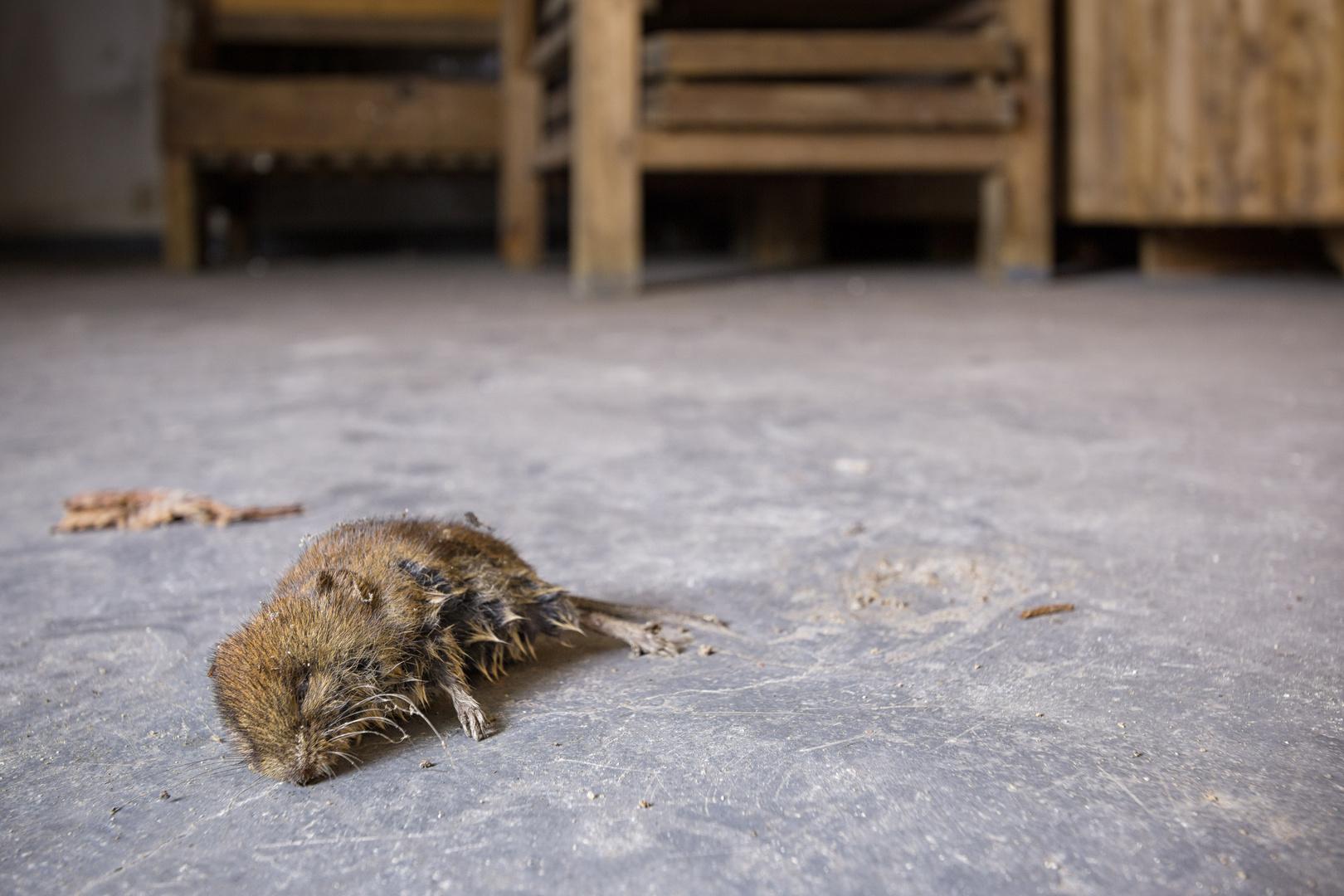 Aus Die Maus Foto Bild Marode Keller Marodes Bilder
