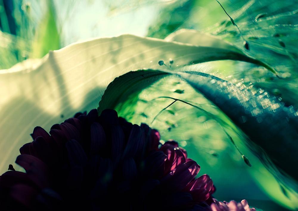 aus einem Blumenstrauß