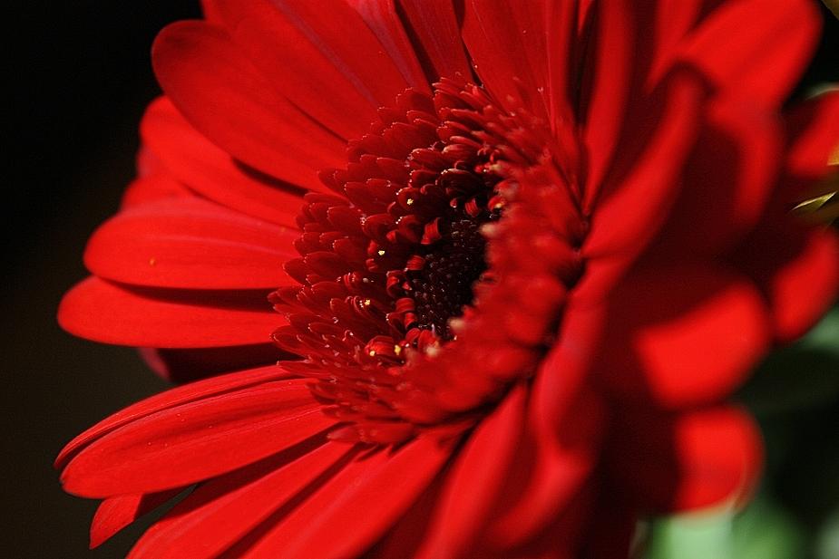 Aus einem bunten Blumenstrauß