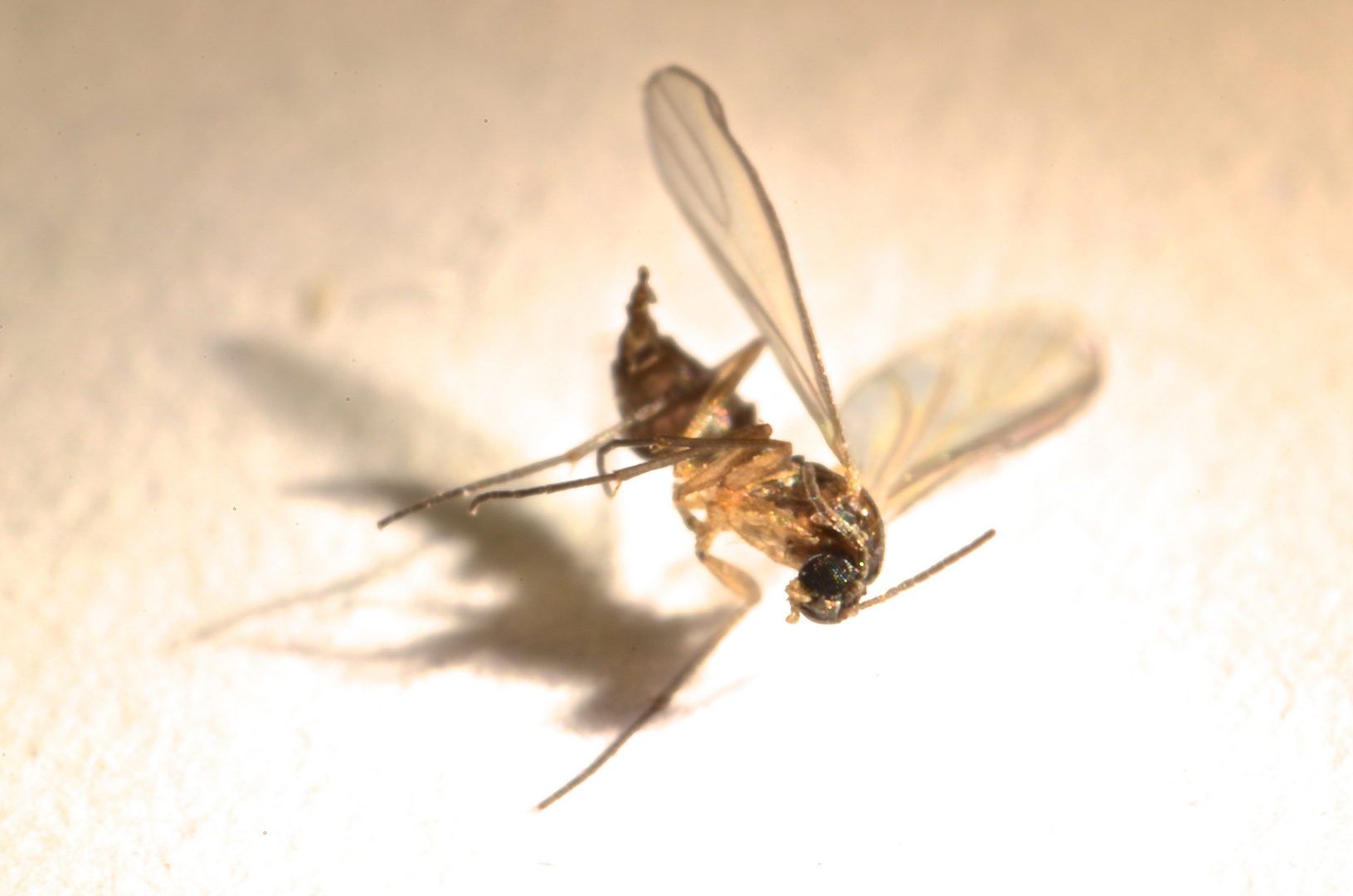 aus einer Mücke...