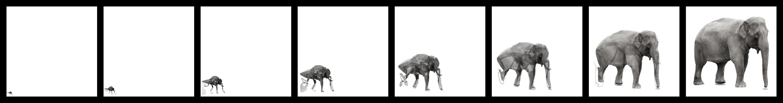 aus einer Mücke (Fliege) einen Elefanten machen Foto