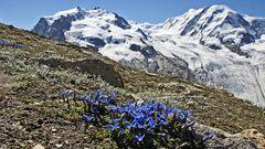 Aus Freude vor dem Frühling eines meiner wichtigsten, weil seltesten Frühlingsbilder...