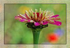 Aus meinem Blumenbeet.