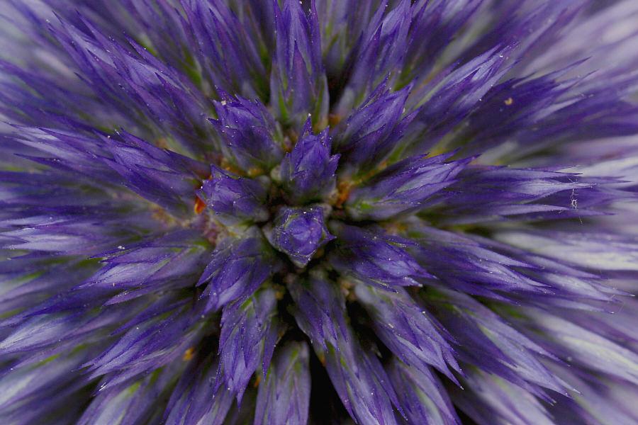Aus meinem Herbarium...01