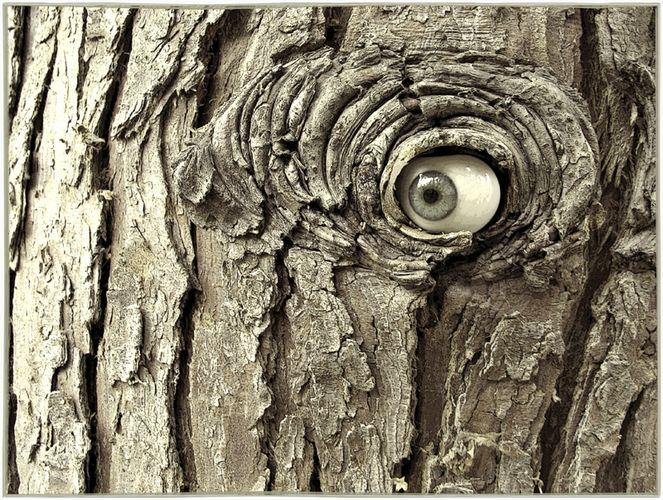 ..aus Trolls Garden..