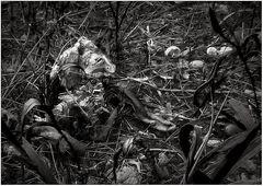 Aus vertrockneten Baumstümpfen ...
