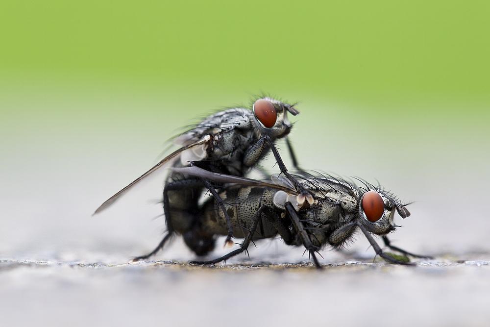 aus zwei wird eins foto bild tiere wildlife insekten bilder auf fotocommunity. Black Bedroom Furniture Sets. Home Design Ideas