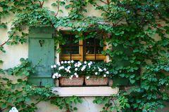 Ausblick ins Grün / Einblick ins Grün
