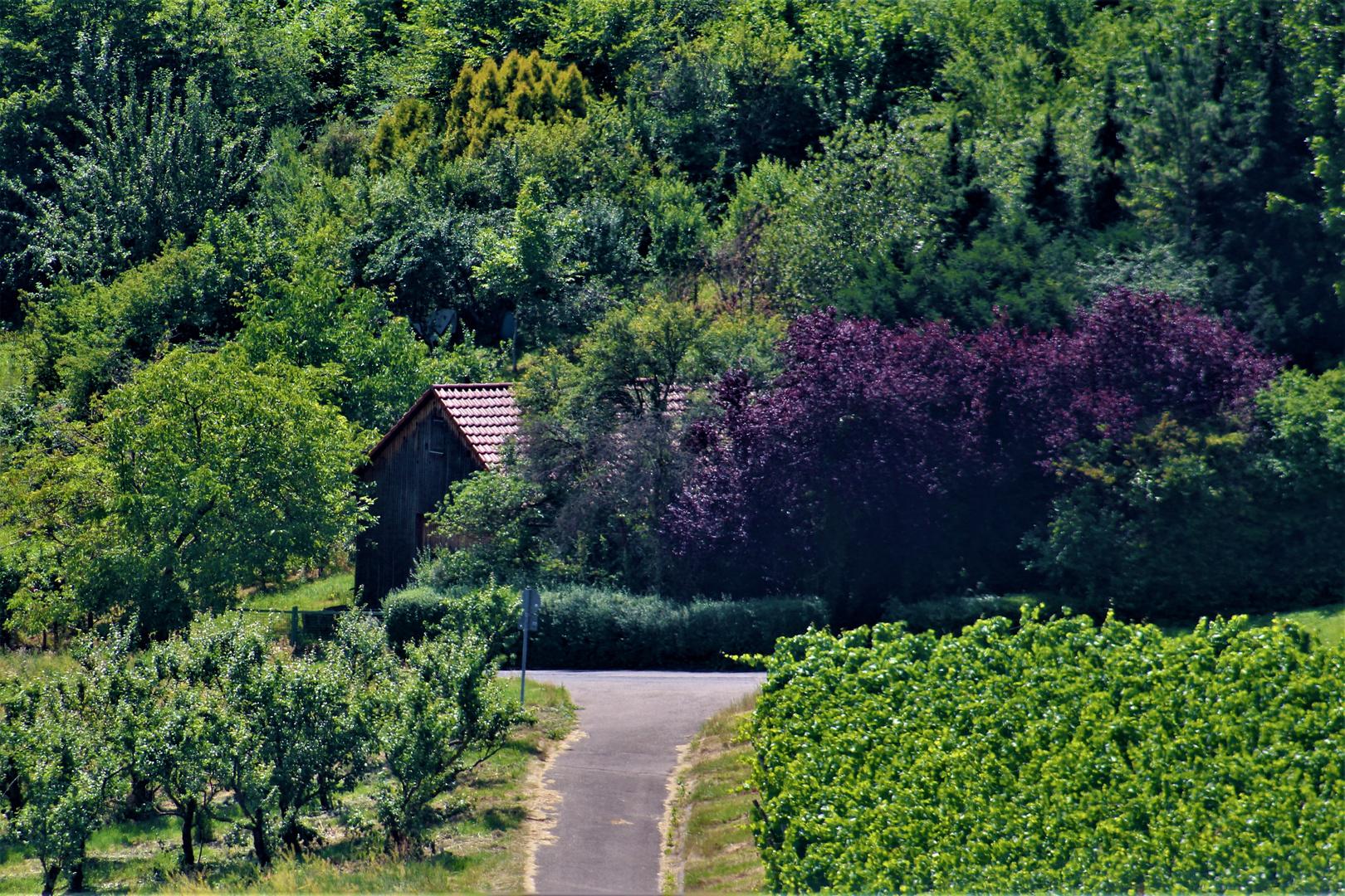 Ausblicke rund um den Rotenberg