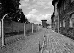 Auschwitz 12