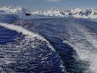 Ausfahrt mit dem Zodiac (Schlauchboot)