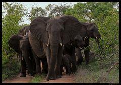 Ausflug der Elefantenfamilie