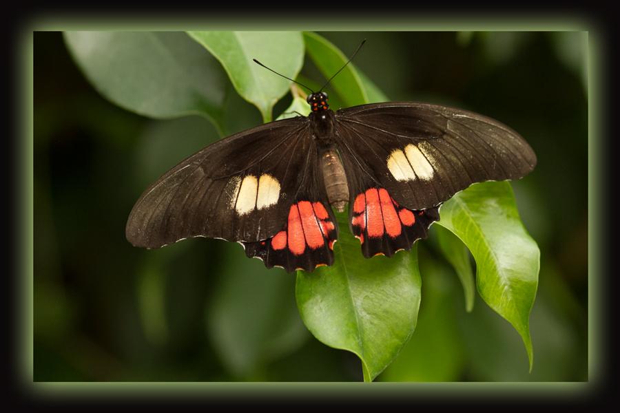 Ausflug zu den Schmetterlingen #2
