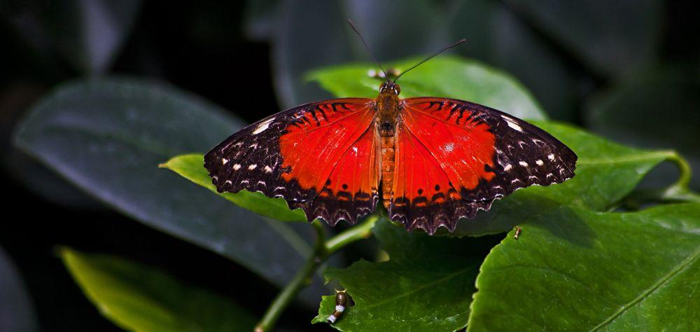 Ausflug zu den Schmetterlingen!