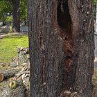 ausgehöhlter Baum