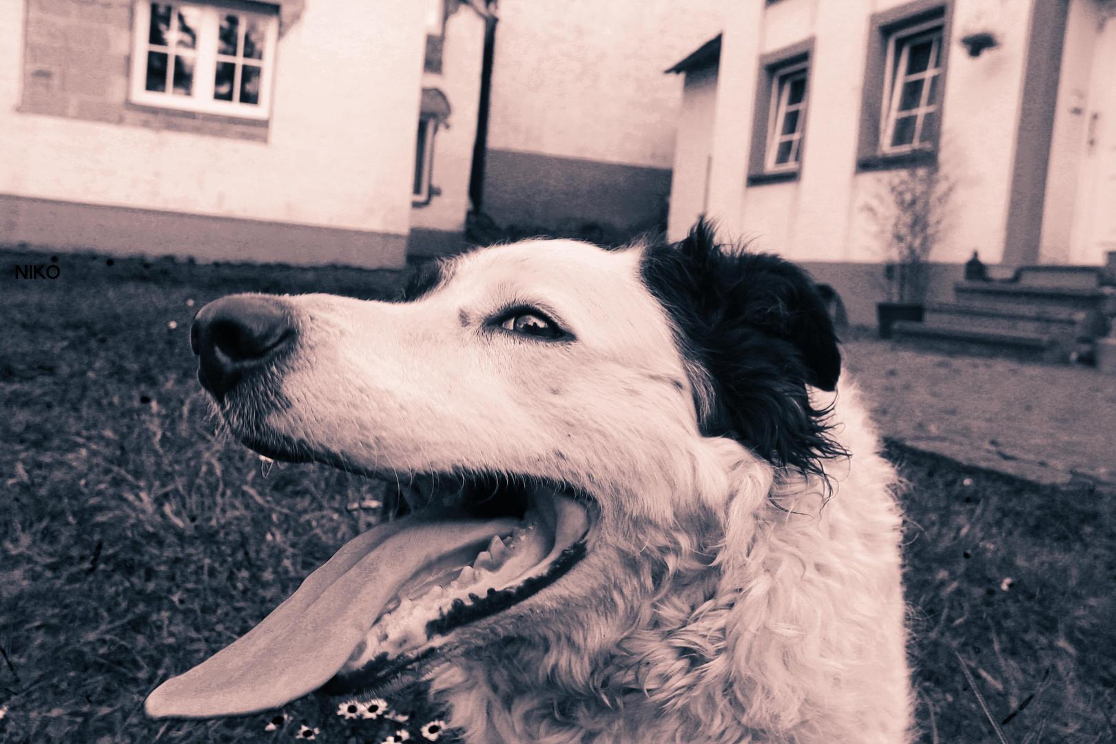 Ausgepowerter Hund