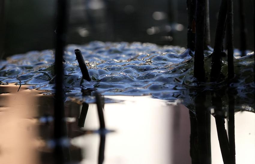 ausgerechnet im Koi - Teich ...