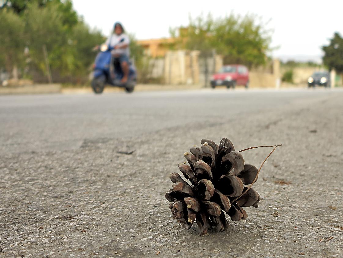 Ausgereift - getrocknet - auf die Straße gefallen / Maturato - seccato - caduto per strada (1)