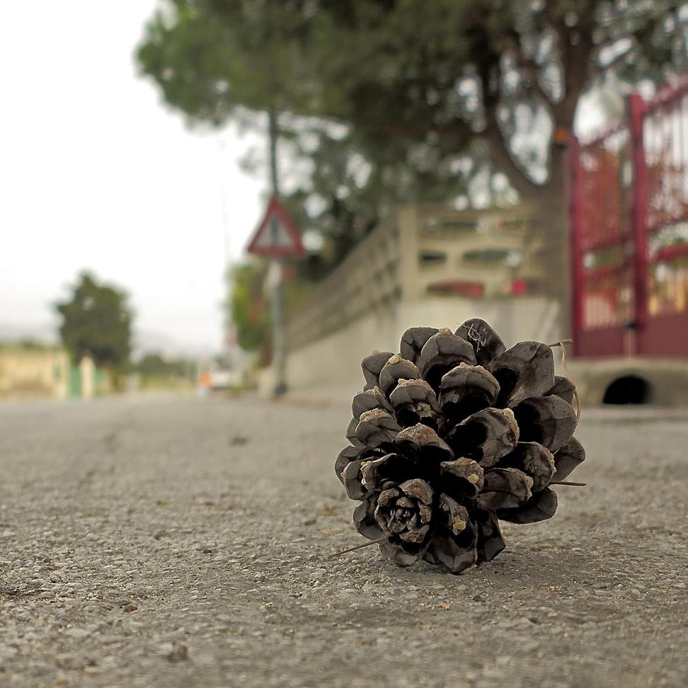Ausgereift - getrocknet - auf die Straße gefallen / Maturato - seccato - caduto per strada (2)