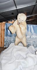 ausgestopfter Eisbär
