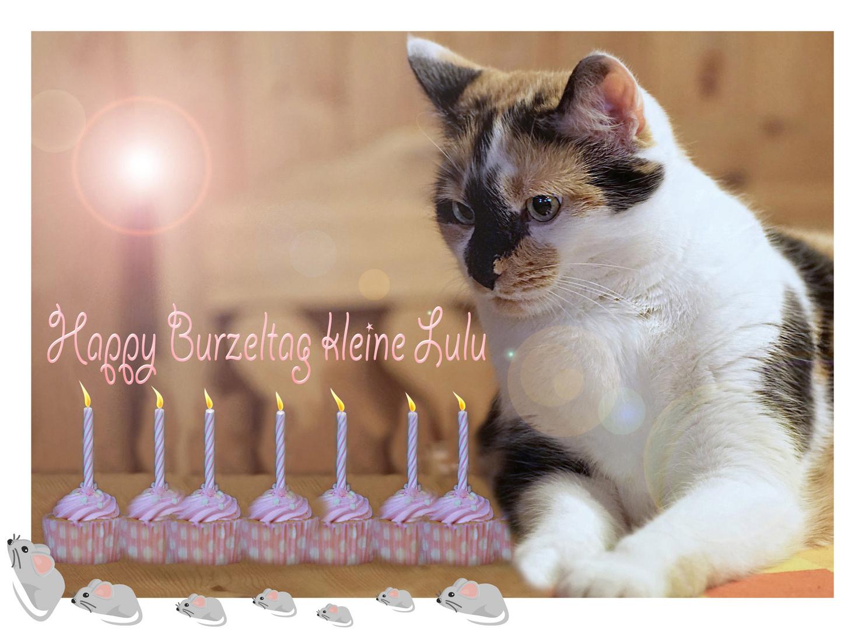 Auspusten Foto Bild Karten Katze Geburtstag Bilder Auf