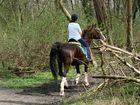 Ausritt im Wiener Prater, man trifft immer wieder hübsche reiterinnen und für mich - schöne pferde!