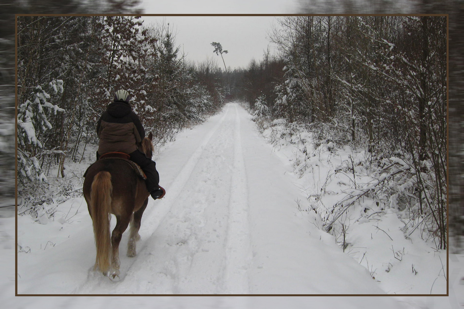 Ausritt im Winter