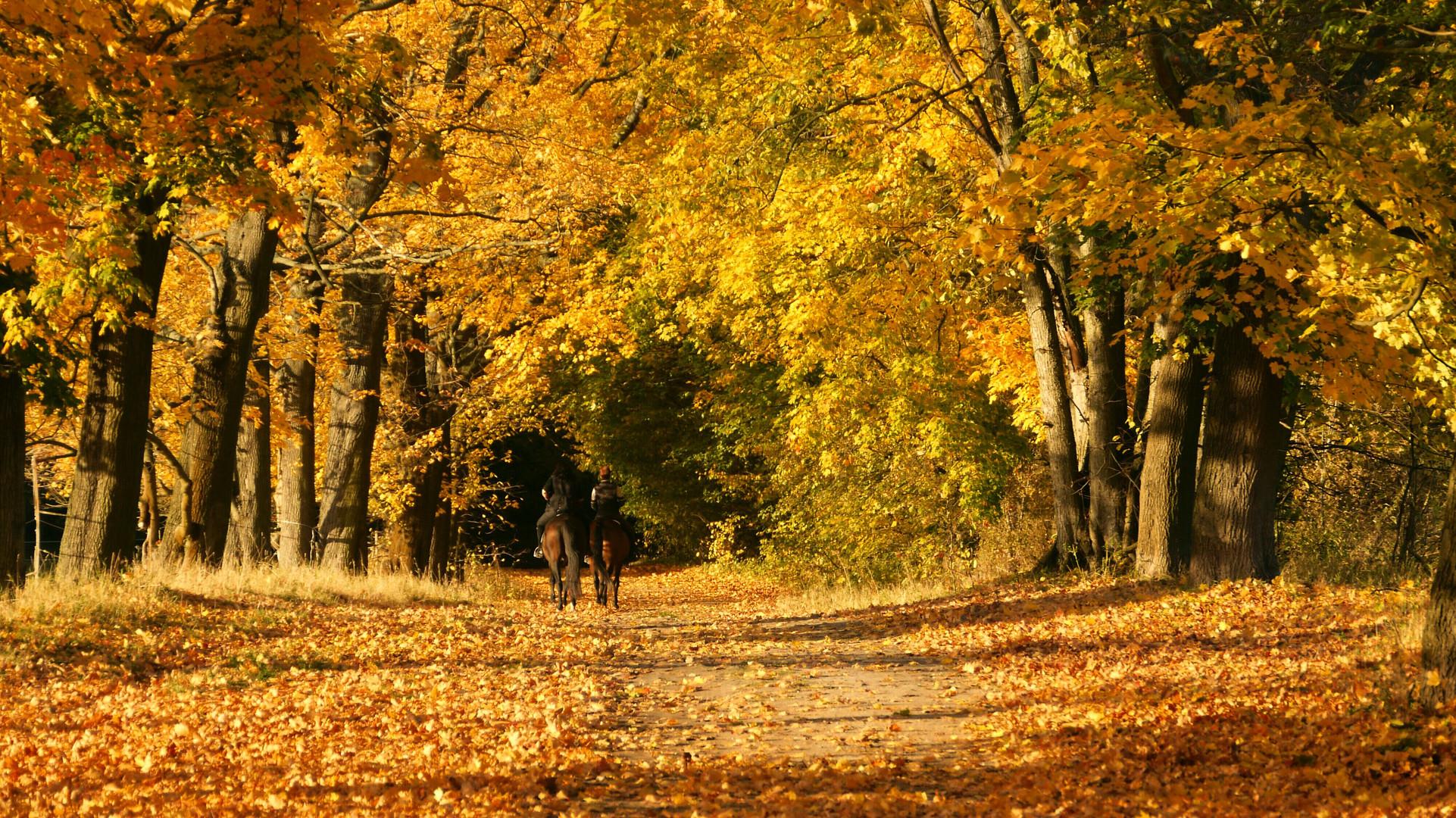 ...Ausritt in den Herbst...