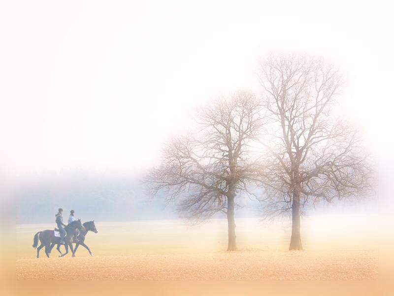 Ausritt..Morgens durch die Felder