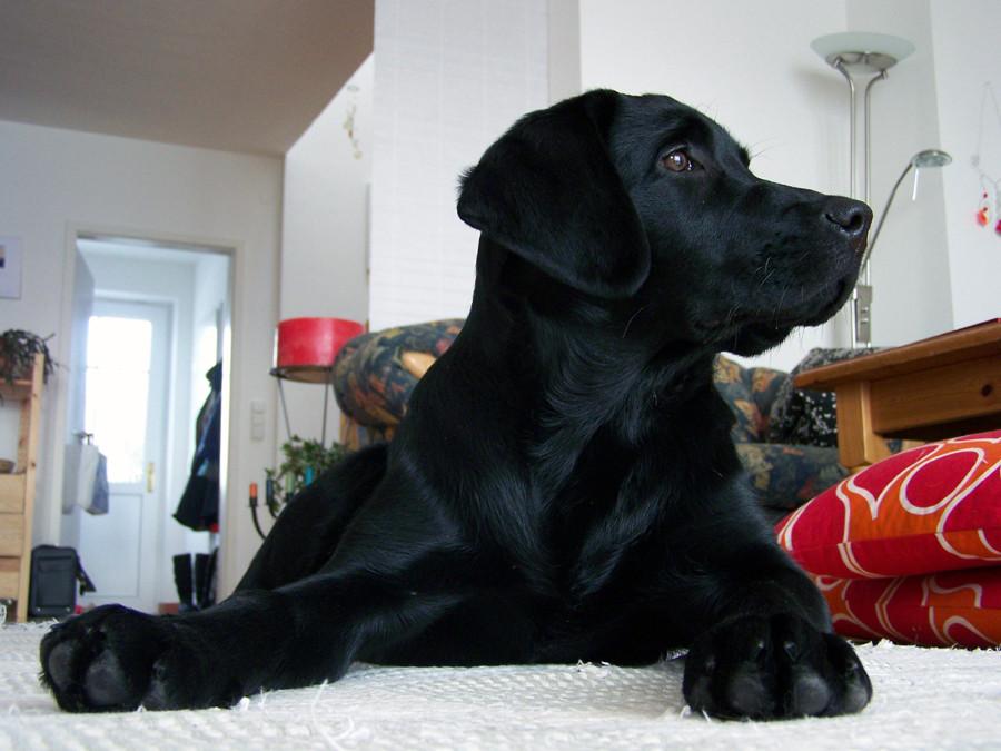 au ergew hnliche hunde f r au ergew hnliche menschen foto bild tiere haustiere hunde. Black Bedroom Furniture Sets. Home Design Ideas