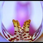 AusSicht einer Orchidee