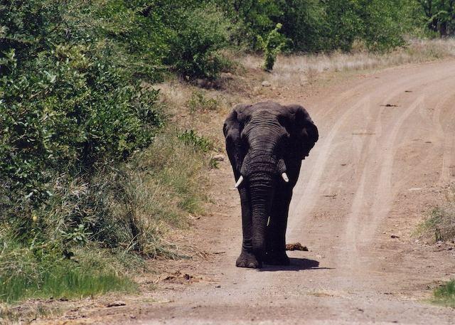Aussicht in Afrika