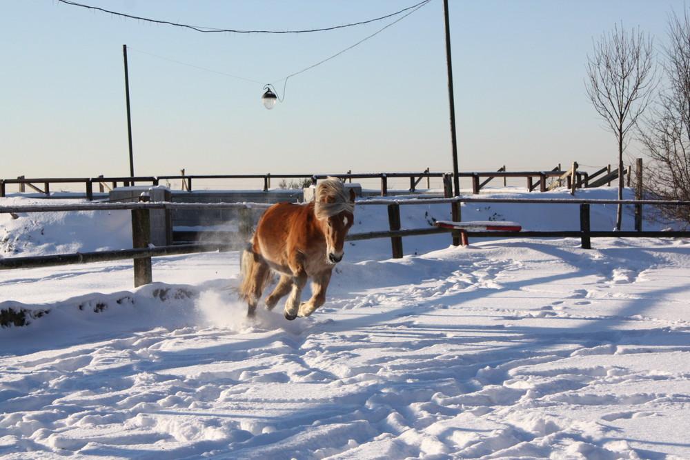 Austoben im Schnee!!!