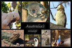Australia's Wildlife